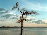 Indigenous Amazonian Indians