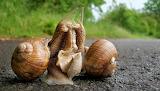 Romance Snail Style