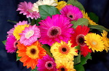 ^ Pale colored gerbera bouquet