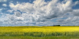 Big Sky & Fields of Gold