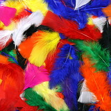 Brightly colored feathers!