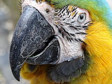 Colours-colorful-macaw-bird