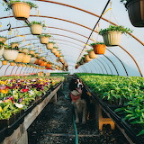 Dog Momo Greenhouse