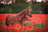 I ❤️ Horses...