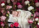 Baby, sleeping dream, girl, flowers, sleep, child, kid, roses