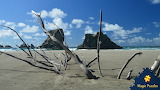 Driftwood on beach at Bandon, Oregon USA by Cheryl Schull Palmer