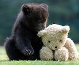 ☺ Cute baby bear...