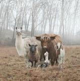 Animals tumblr lustik highlandvalley