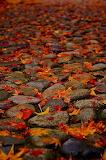 #Leafy Cobblestones- Pinterest