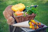 Cat, vegetable basket
