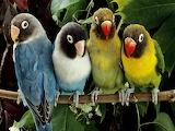 Parrots color