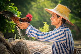 Asian man holding rooster