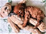 My Favorite Sleeping Buddy