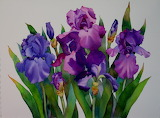 ^ Irises ~ Nel Jansen