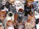 Cats-cats6985214