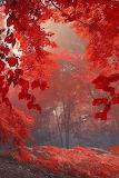 #Misty Autumn