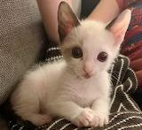 Super Sweet Kitten