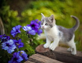 Sweetie by the petunias