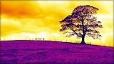 TechnicolorTree_JanetStansfield
