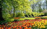 Весенний цветущий парк