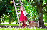 Summer, cherry, mood, child, garden, dress, ladder, girl, girl,
