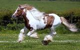 Pferd/ Horse