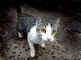 Animals-cat-feline-yellow-eyes