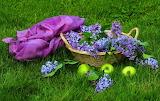 Cesto con lilas