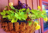 #Beautiful Planter on Mayne Island