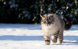cats_kittens