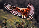 #Hawk