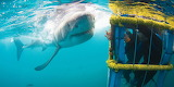 Great-white-shark-cage-diving-in-cape-town-4-1024x512