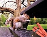 #Naughty Piro Squirrel
