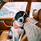 Dog Momo Mercedes