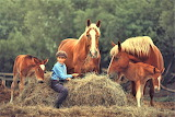 young boy with horses