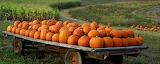 Carabasses - Pumpkin