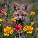 ☺ Cute little fox...