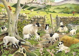 lambing time, Tracy Hall