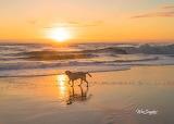 Beach dog morning walk