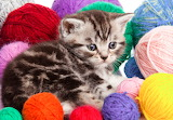 Kitten-with-Balls-of-Yarn