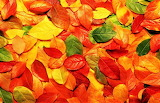 #Colorful Leaves