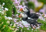 Birds, flowers, birds, beauty, pair, bright, stalled, Atlantic p