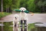 Wet weather dogs