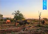 Rhinoceri in the veldt of Tanzania, Africa by auricle 99 from ma