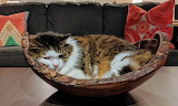 Cat in wooden bowl