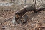 1280-a broken tree