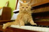 ☺♥ Cute piano player...