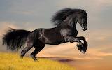 Wild Horses (10)