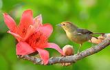 Flower, nature, bird, branch, Bud