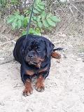 Piękny pies koleżanki